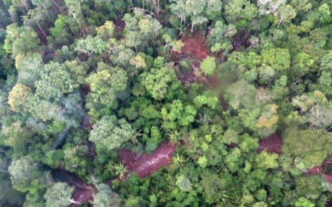 Roubo de madeira de terra indígena chega a R$ 400 milhões